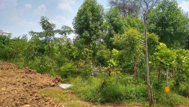 Photo of અમદાવાદના સિંધુભવન પાસે 35 હજાર વૃક્ષો સાથે ઓક્સિજન પાર્ક નિર્માંણ પામશે.